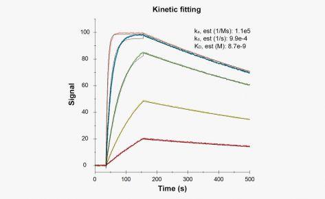 Kinetics/Affinity